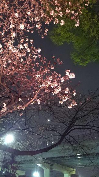 都市農業公園の五色桜まつり