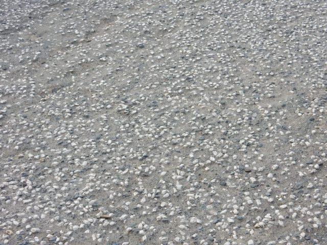 荒サイ 葛西臨海公園-若洲公園