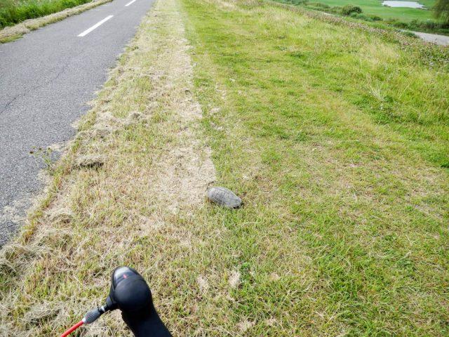 江戸川サイクリングロード 亀