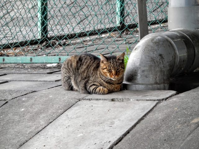 荒川サイクリングロード 猫